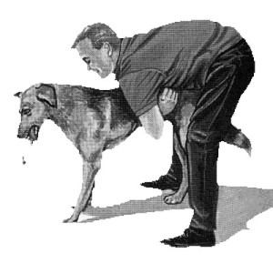 Homosexuality isn't the only danger of performing a Heimlich maneuver - bestiality and other fornicating perversions are also a risk.