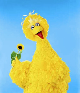 Good ole Big Bird posing for the camera.