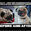 FIRST-DOG-SEX-CHANGE-FEMALE-TO-MALE-POST-OP