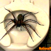 Toilet Spider at 400