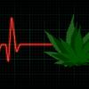 washington-marijuana-deaths-legalization